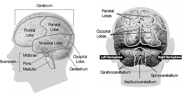 adolescent=brain